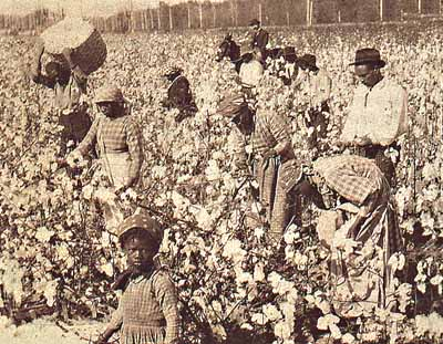 Photo of slaves picking cotton in Texas